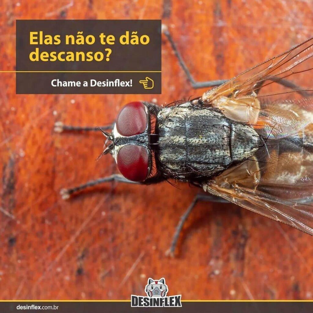 Como espantar as moscas de sua casa